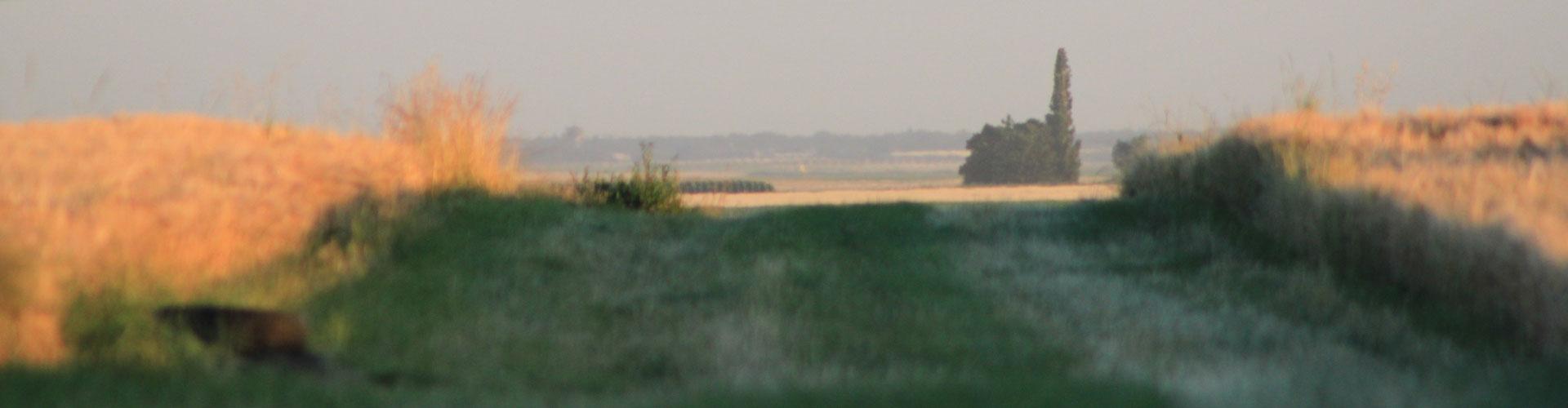 communaut u00e9 de communes plaine du nord loiret  u2013 d u00e9couvrez